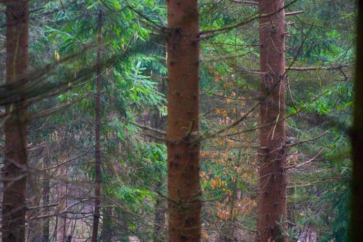 Nur nachhaltige Forstwirtschaft sichert auf Dauer die Wälder (Foto: Christian Handler)