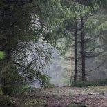 Herbstwald (Foto: Handler)