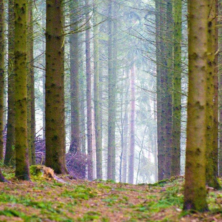 Österreichischer Wald ist zu großen Teilen PEFC-zertifiziert