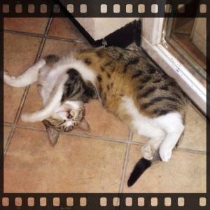 Bei Katzen kann natürlich nichts schiefgehen. Jeder liebt sie! (Foto: Privatarchiv Handler)
