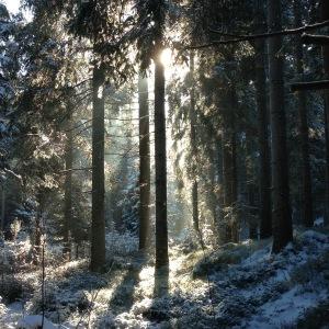 Schnee im Waldviertel in der Nähe von Klosterberg