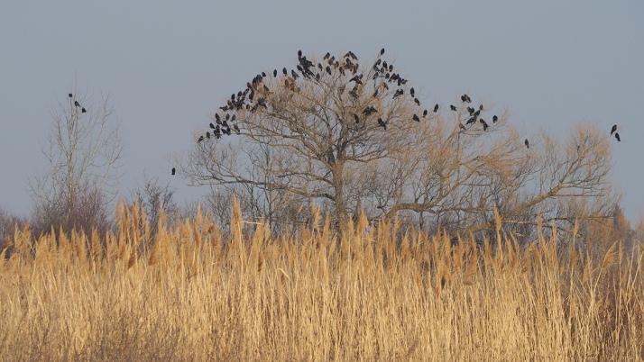 Manchmal haben Vögel auf Bäumen etwas zu bedeuten, manchmal sind es einfach nur Vögel, die auf Bäumen sitzen. (Foto: Christian Handler)